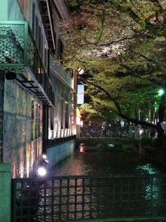 nightly riverwalk, kyoto