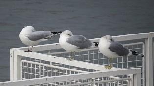 donau birds