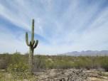 2. Saguaro National Park