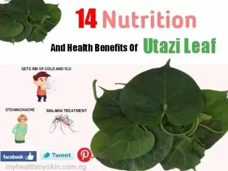 Health Benefits of Utazi leaf