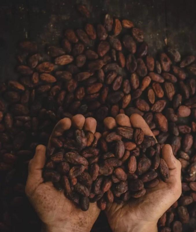 Handful of Cocoa