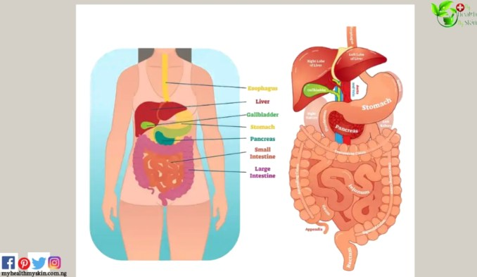 Why Does Your Body Produce Gas?