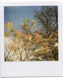 flowers_polaroid6