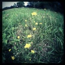 wildflower9