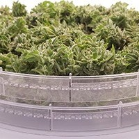 Simply trim your buds, fill the trays, and turn the dryer on. HerbsNOW does the rest.