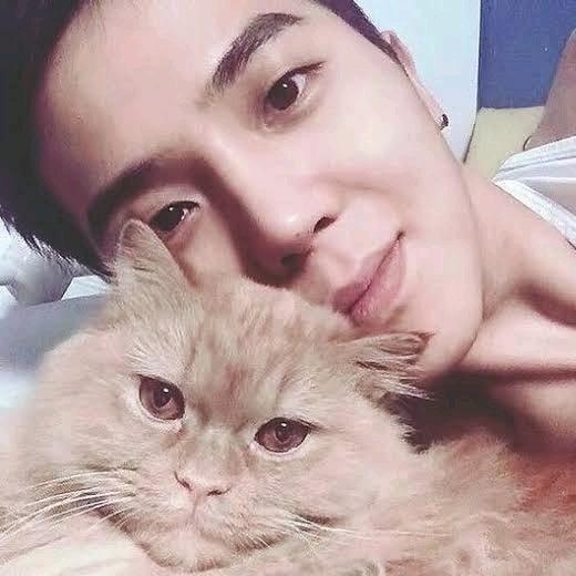 1000 Inspirasi Nama Kucing Korea Buat Pecinta Drama Korea Myhewan
