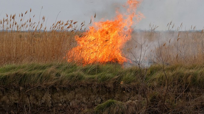 Image result for put grass to the fire