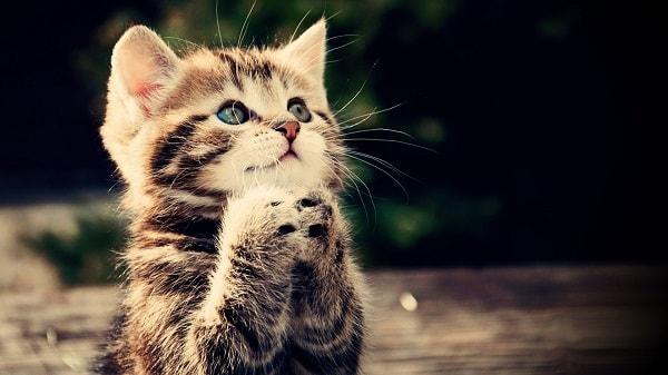 Картинки с животными: красивые и смешные, с надписями и без