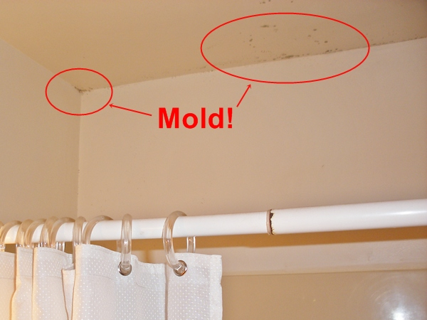Bathroom mold removal techniques my home design no 1 for Bathroom mildew removal