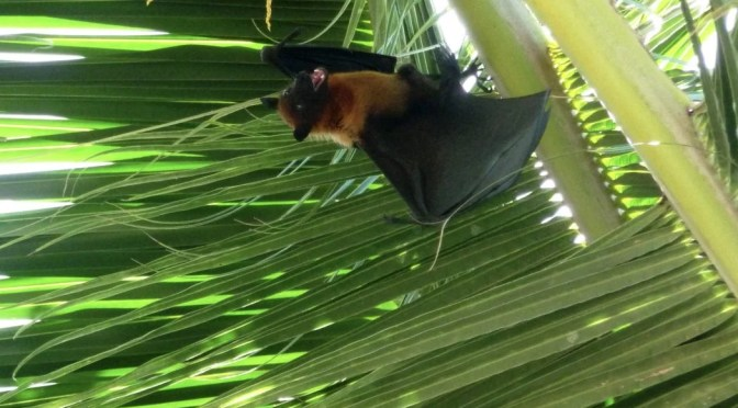 Ineffectiveness of the Bat Conservation Trust