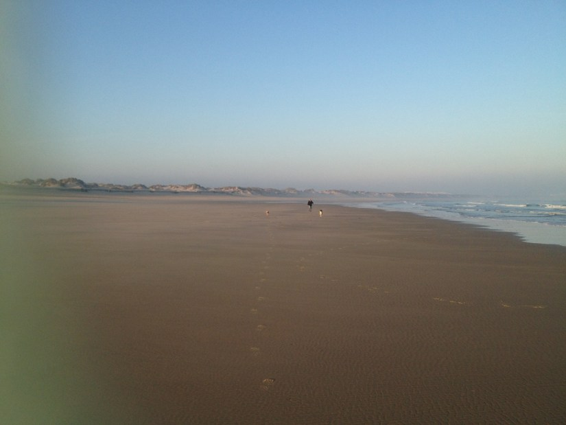 Dad with the dogs running on the beach