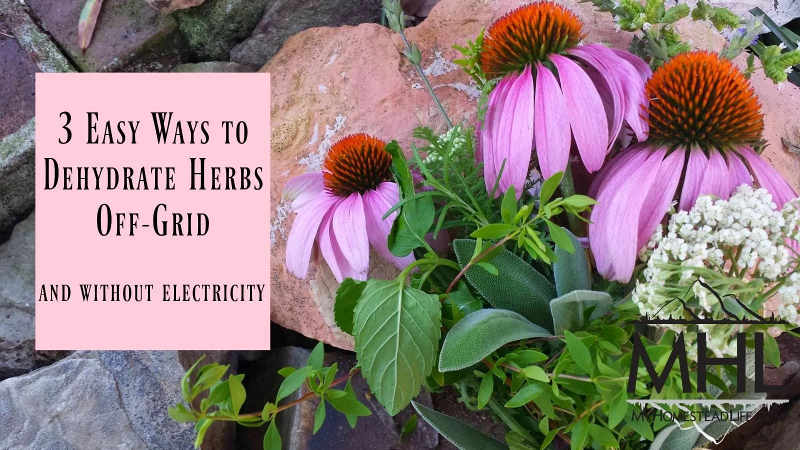 3 Easy Ways to Dehydrate Herbs Off-Grid and Without Electricity