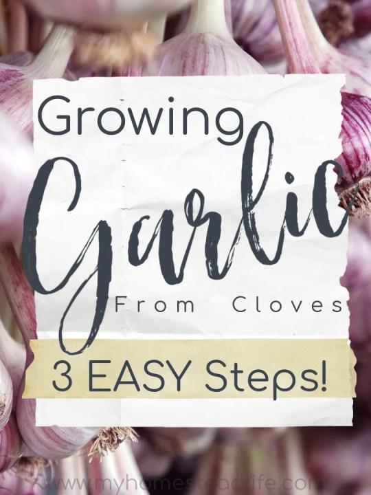growing-garlic