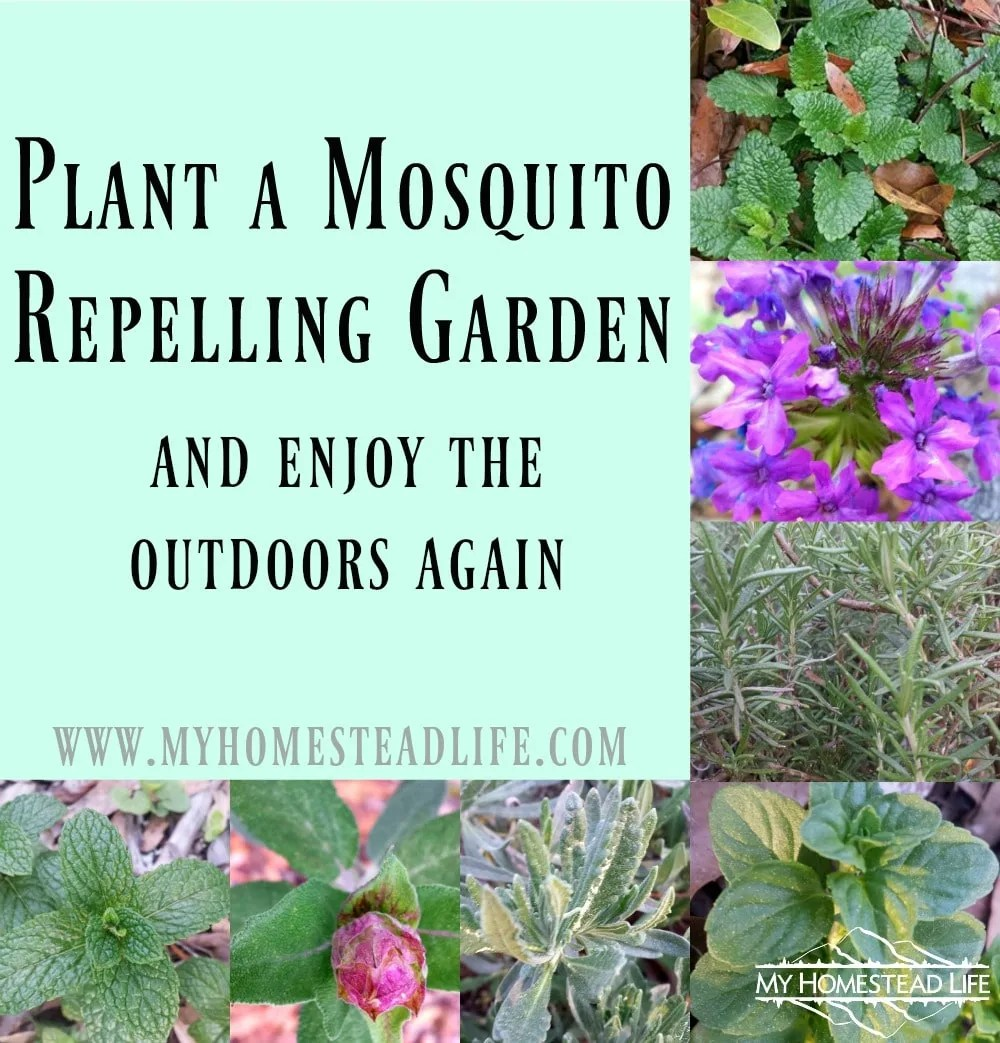 Plant a mosquito repelling garden and enjoy the outdoors again.