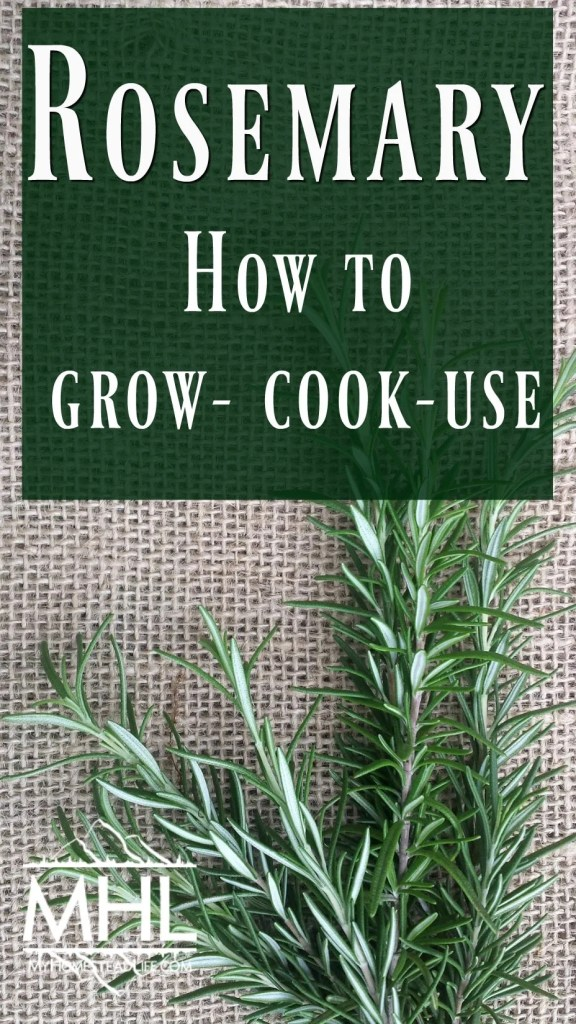 Rosemary: how to grow, cook and use rosemary.