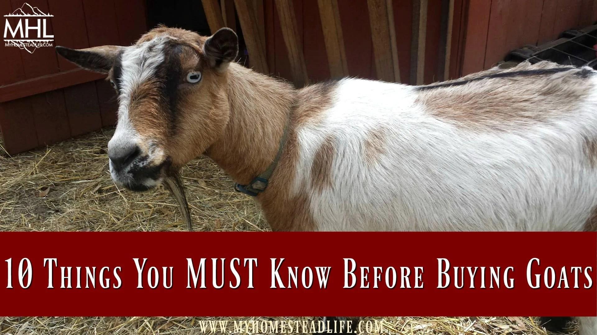 Ivomec for pygmy goats