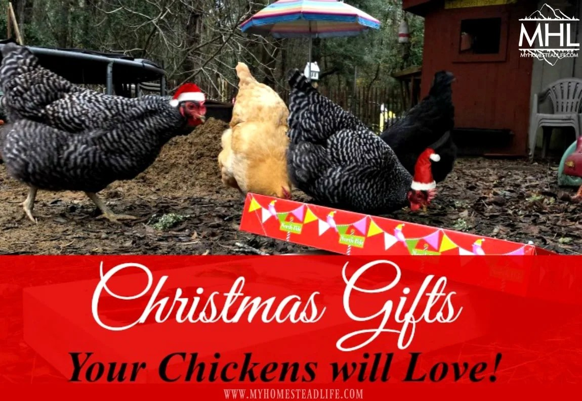 Christmas Gifts Your Chickens Will Love! Gifts for Every Budget