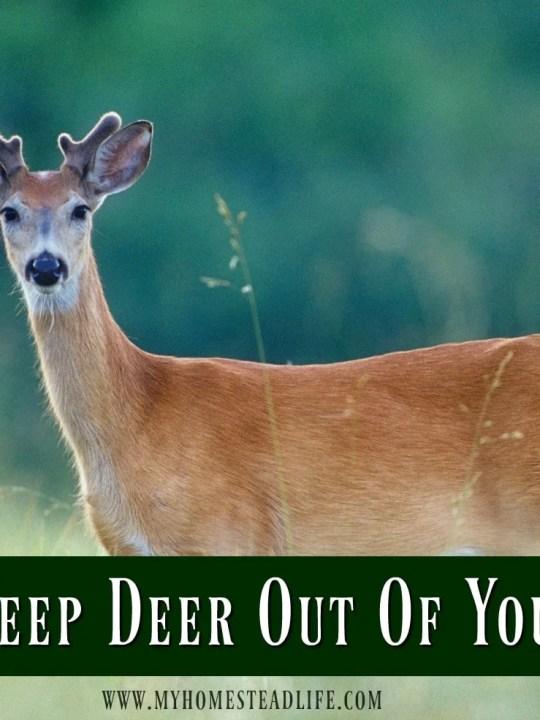 deer-garden-keep deer out-garden pest- gardening