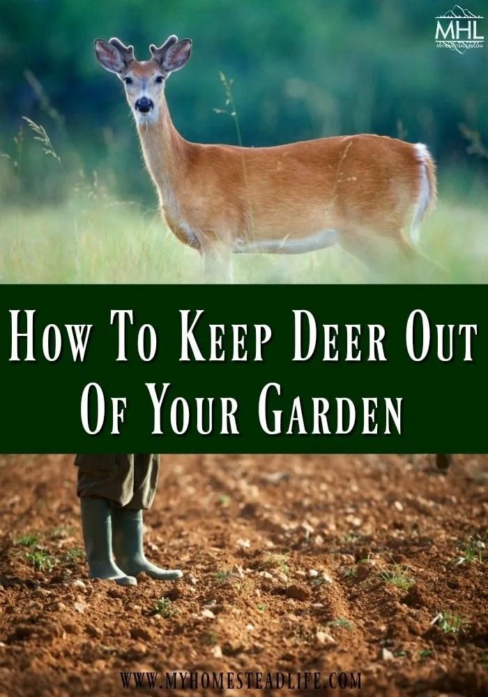deer-garden-how-to-keep-deer-out-garden pest-