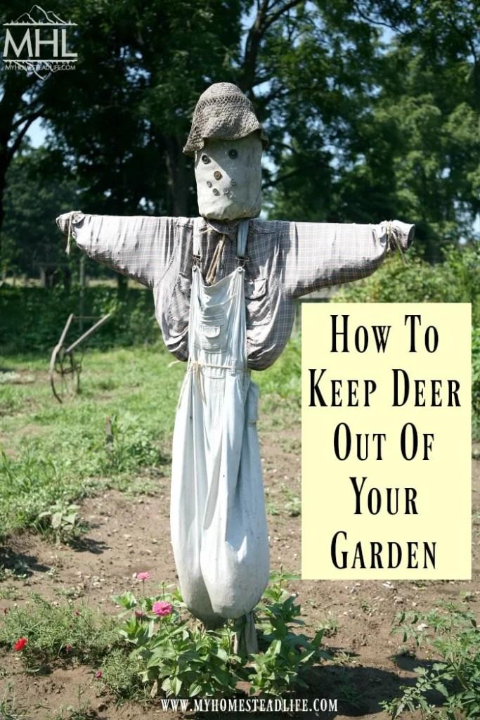 how-to-keep-deer-out-of-the-garden-garden pest- deer eating garden