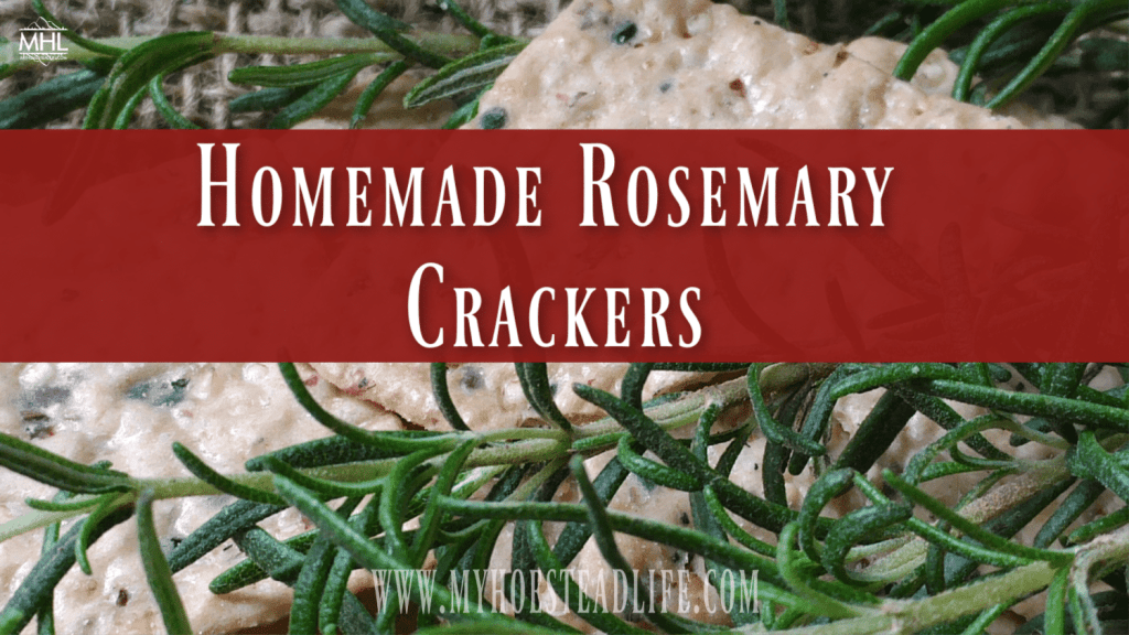 cooking with herbs- herbs- rosemary-crackers