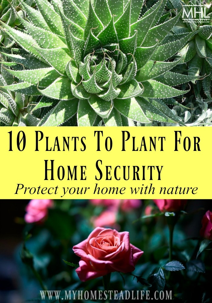security-plants-home-protection-hoome defense