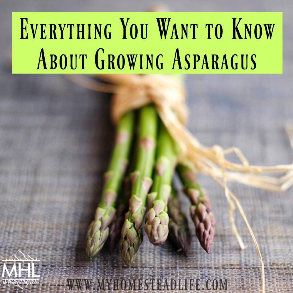 growing-asparagus-how-to-grow
