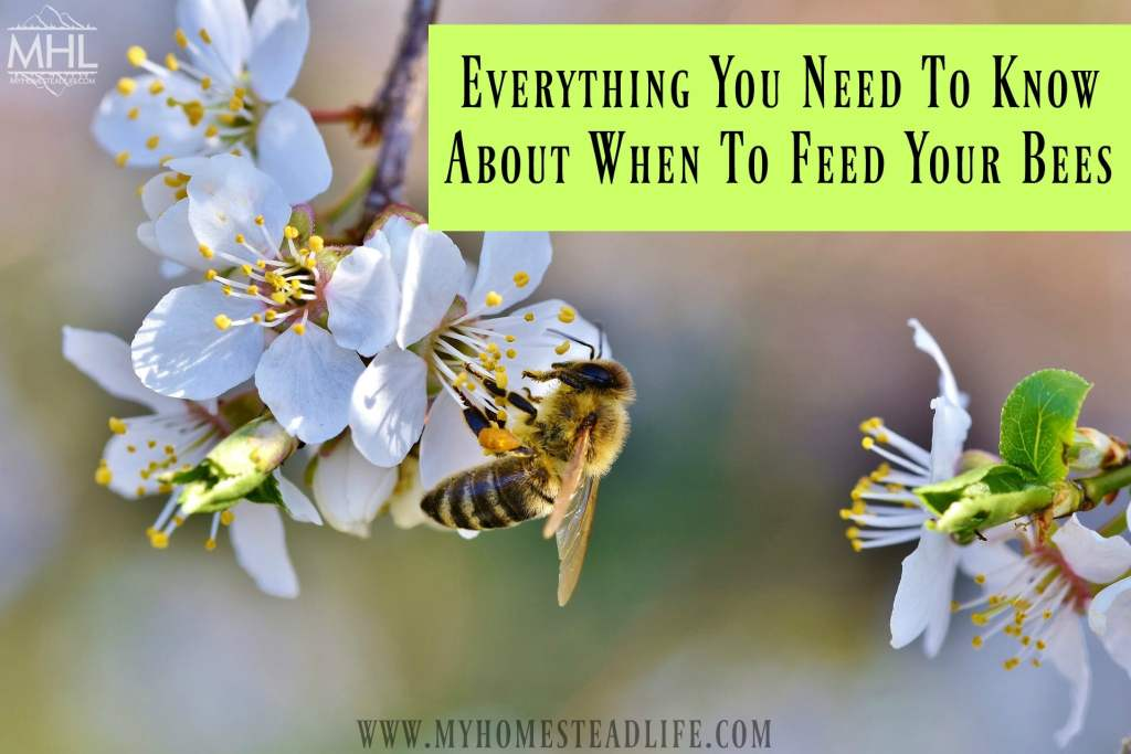 when to feed bees- nectar flow- honeybees- beekeeping