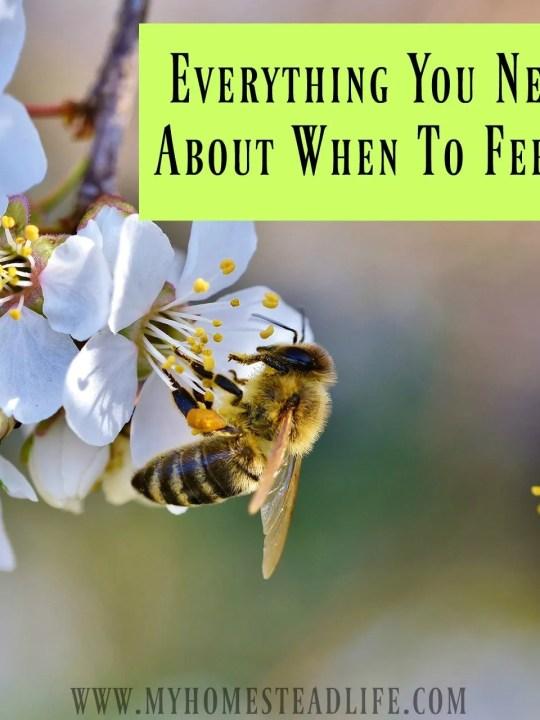 when to feed bees- nectar flow- honeybees- beekeeping