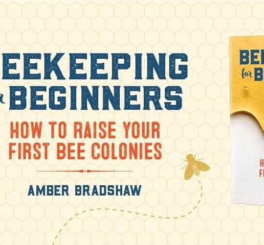 beekeeping-for-beginners-honey-bees