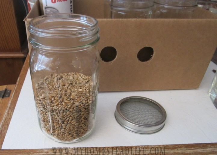 soak your fodder seeds for 24 hrs in a mason jar