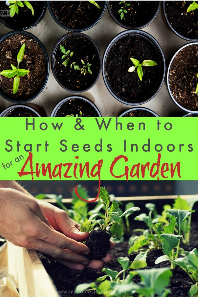 when-to-start-seeds-indoors