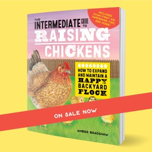 how-long-is-a-chickens-lifespan