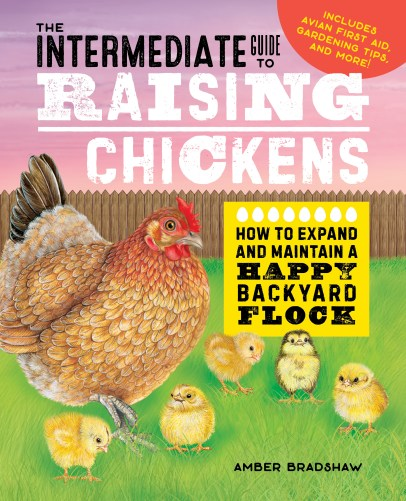intermediate-guide-to-raising-chickens