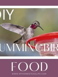hummingbird-food-recipe