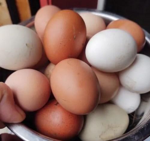 fertile-chicken-eggs-for-sale