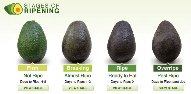 ripe avocado chart