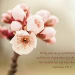 Before & After Shots: Cherry Blossom with Text