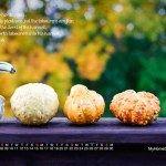 Feels Like Fall—November's Desktop Calendar!