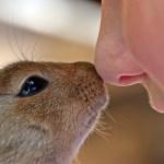動物と子どもの鼻がくっついてる