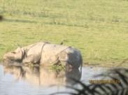 PHOTOGRAPHY CONTRIBUTED BY:- DIKSHITA KASHYAP, CLASS:-XI B K.V. NFR MALIGAON, from a tour to Kaziranga Wildlife Sanctuary