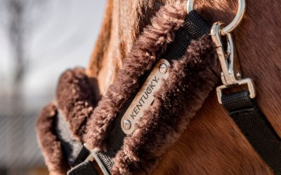 Review: cabezada de nylon de Kentucky Horsewear
