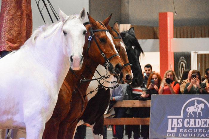 Espectáculo ecuestre en la pista non stop de la madrid horse week 2019