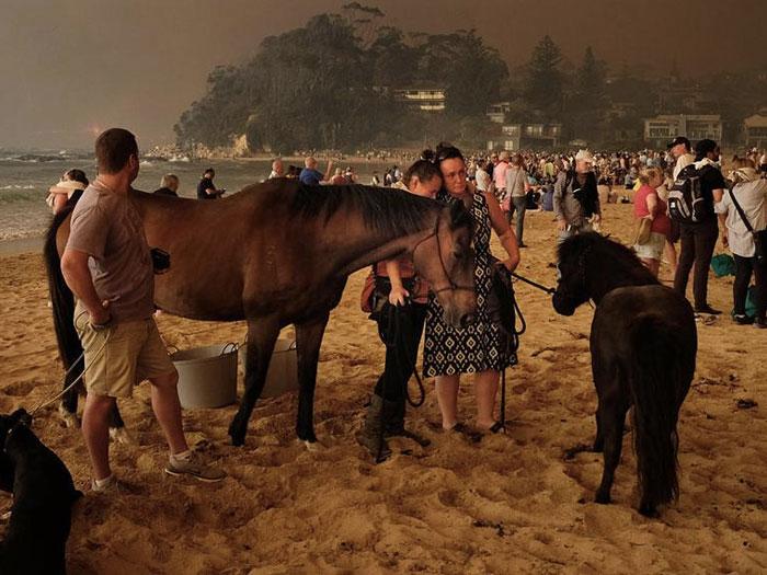 afectados por los fuegos en Australia en una playa, algunos con caballos, a los que quiere ayudar Equestrian Fire Relief Australia