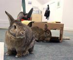 Kaninchen drinnen spielen