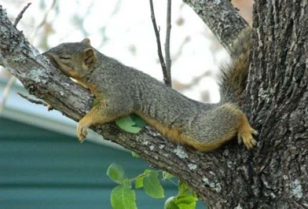 Squirrel Facts 101 Frequently Asked Questions About Squirrels Myhuntingear Com