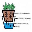 Hydroponic Wick System