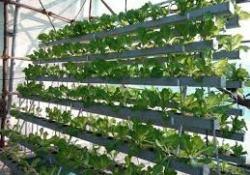 Nutrient Film Technology System