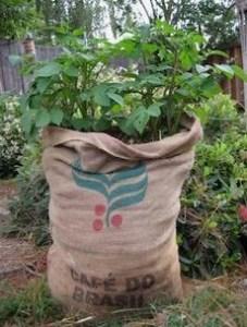 Potatoes in Burlap Bag