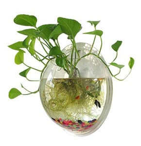 Small Useless Aquaponics system (example of what not to buy)